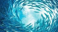 哪种深海鱼最受12星座的喜爱? 双子座是沙丁鱼, 你呢?