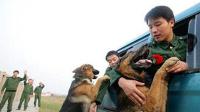 第88期 军人退伍时能否把军犬带走