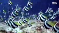 令人惊叹的唯美海底世界