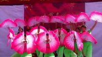城子镇2012国庆汇演上集