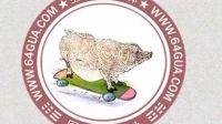 属猪的人2013年运程,猪年出生的人蛇年生肖运势预测-周易天地
