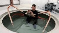这是世界上最危险的螃蟹? 长4.2米, 凶猛的鲨鱼都是它们的食物