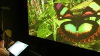 蝴蝶的秘密世界展览, 奥克兰博物馆