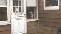 国外铲屎官感觉被自己家的狗子监视了