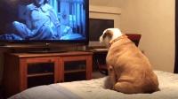 超爱看电视的狗子们, 这感情比人还丰富