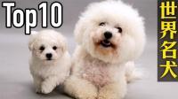 【中文】世界10大名犬, 第一名的狗狗贵得吓死人!