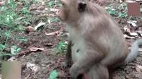 猴子流产, 猴妈妈抱着猴宝宝不愿意相信这是事实! 泪奔了