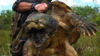 龟中王者 就像是披甲恐龙 分分钟咬断你的手指 最重达200多斤