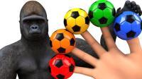 儿童学英语 用大猩猩足球手指家庭歌曲 教育视频 【 俊和他的玩具们 】