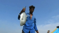 只需一根鱼线就能在海上钓鱼, 一个下午能钓到几十条!