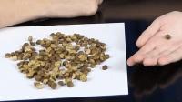 墨西哥的神奇豆子, 在手上自己会跳, 里面的东西一般人接受不了!