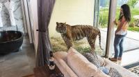 老虎狮子陪吃饭, 和熊一起洗澡, 这家五星级旅馆你敢住吗?
