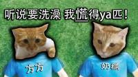 """凯麒Vlog#18: 这是我养过最""""差""""一届的猫"""