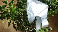 花盆上放一个塑料袋, 解决了不少家庭的大难题, 学会了受用一辈子