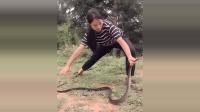 厉害, 广西美女徒手抓住一条超大的毒蛇, 胆子真大啊!