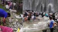水库漫坝2万斤鱼从天而降 村民疯抢装满麻袋扛回家