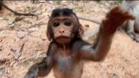 母猴与小猴, 小猴瞪着一双骨碌碌的大眼睛, 不停地找东西吃