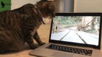 用电脑来逗猫, 挑战喵星人的智商