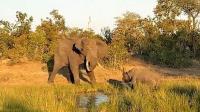 大象攻击濒危犀牛, 游客大喊帮犀牛脱身!