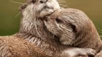 被人类赶尽杀绝的四种动物, 多年后竟重现江湖, 实在不可思议!