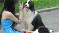 总算明白了, 为什么现在女人都喜欢养狗, 能带来很多快乐!