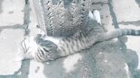 一只躲在车轮前睡觉的小猫, 这应该是过来碰瓷要小鱼干的吧?