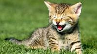 十二星座化身为猫, 哪个最可爱? 我是水瓶!