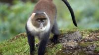印尼森林公园一猴子抢食不成反咬合照游客