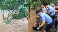 男子湍急洪流中抱树求生 两辅警跳水勇救