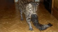 女子养了一只猫, 隔几天就给家中抓鱼, 跟踪一看发现了不得!
