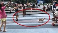 狗: 主人爱跳广场舞我能怎么办, 我好想逃, 却逃不掉!
