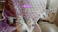 美拍视频: #宠物#