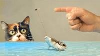 苍蝇飞行时最大拖拽力能将仓鼠带上天不? 网友: 结果跟我想的一样