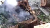 武汉火炉被实锤! 大树都冒烟了