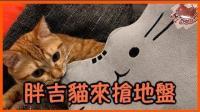 【巧克力】『橘子冰的日常』- 胖吉猫来抢地盘