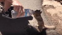 口渴的小动物一瓶盖水就能被拐走