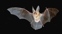 12星座讨厌哪种哺乳动物? 蝙蝠最让摩羯座抓狂!