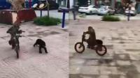 猴子被狗追骑车狂逃 画面尴尬逗乐众人