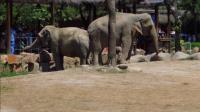 2015年9月10日上海野生动物园的动物们