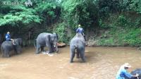 哦吼, 大象又拉粑粑, 又尿尿, 羞羞