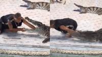驯兽员将手臂伸入鳄鱼嘴中 被鳄鱼一口咬住