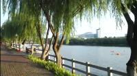 8月2日直录平湖清晨游泳短视频
