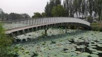 【原创实景】公园里的出水莲花
