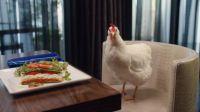 人不如鸡系列之《话痨鸡的尊贵生活》