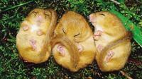 最懒的动物 一生中的4分之3都在睡觉 宁愿饿死也要睡觉