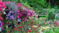 维多利亚~宝翠花园(下集)加拿大旅游系列(16)
