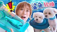 1048 夏日清爽鲨鱼软糖冰饮DIY!内含夏天和狗狗的暖心日常!
