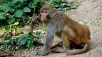 黔灵山上的猴子--男博万视觉