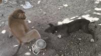 泼猴砸了狗狗的饭碗, 结果哮天犬火了!