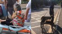 大型犬小区作恶连伤4人 民警当场将其击毙